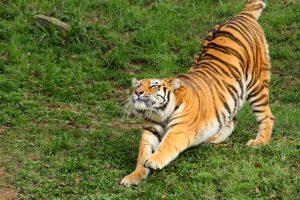 stretching-five-tibetan-exercises-t5t-warm-ups